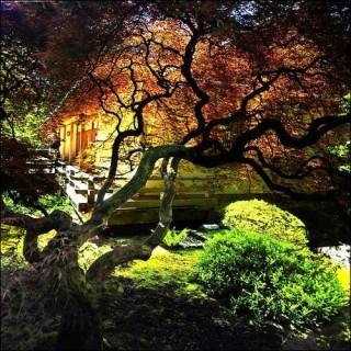 I giardini giapponesi di portland il giardino delle esperidi for Laghetto giapponese
